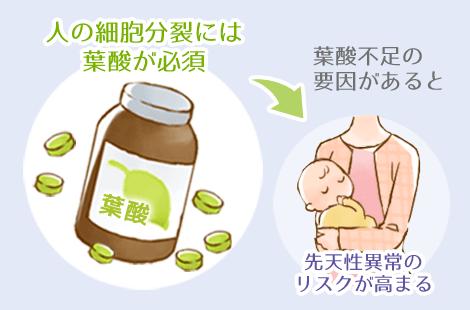 葉酸の効果と必要性