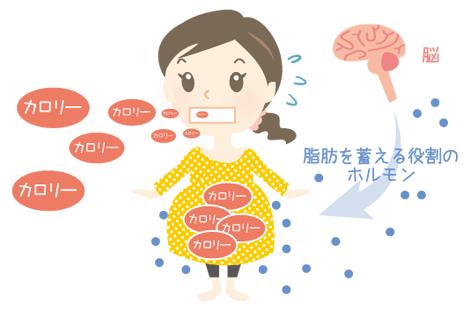 妊娠 中期 カロリー