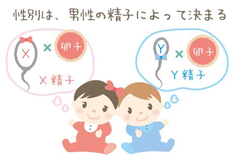 精子の種類