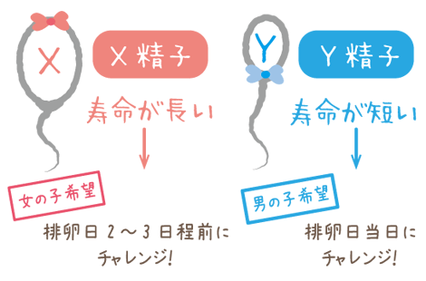 精子の特徴