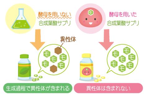 酵母葉酸の特徴
